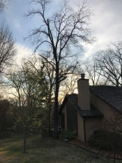 Tulsa tree removal dead hickory hanging over house