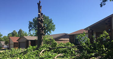Tulsa Tree Removal